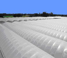 agriculture - Flexible sheeting